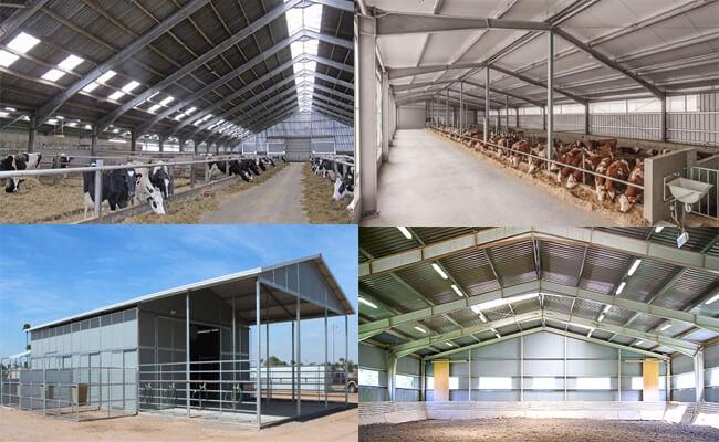 Steel Livestock Building